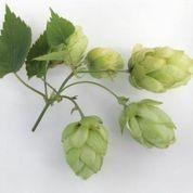 hops3