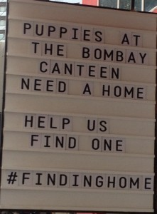 Chef Thomas Zacharia has taken up a noble cause – adopting stray puppies.